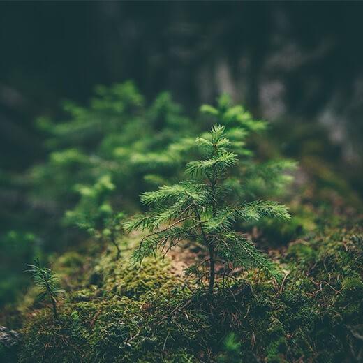 Tree+chic